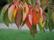 16th Nov 2019 - multi coloured - the autumn leaves