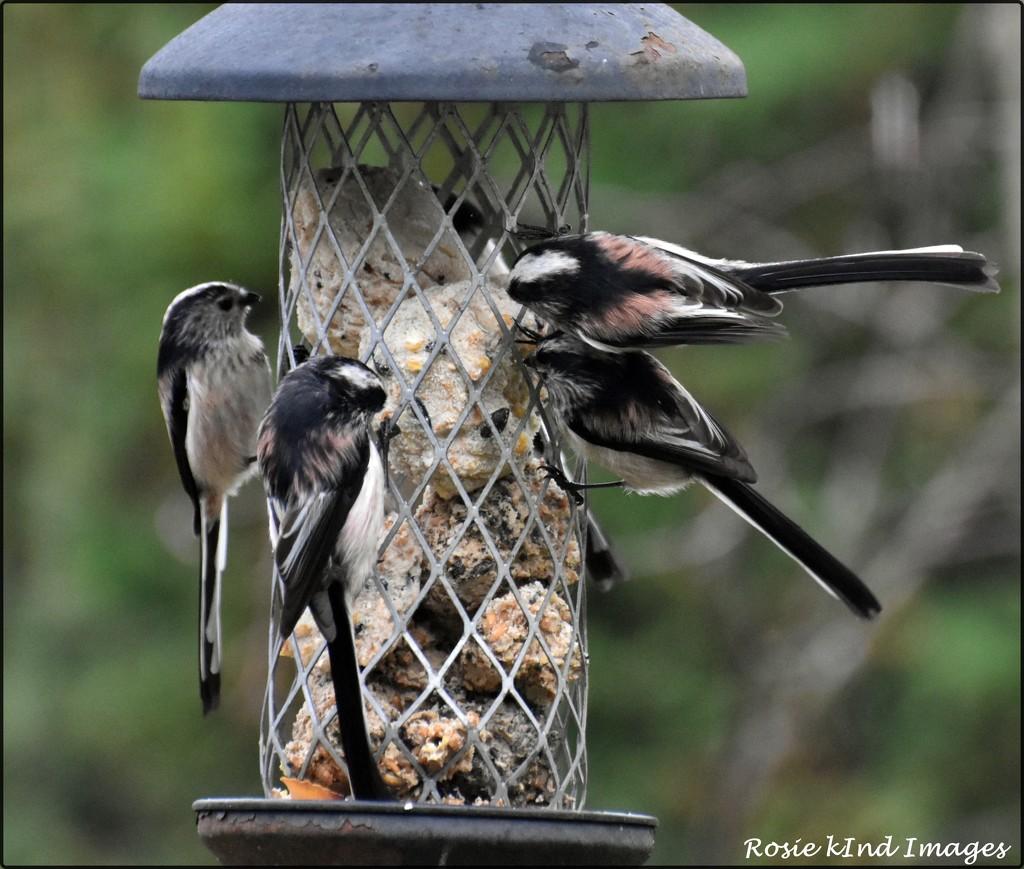 RK2_6465  My sweet little birds by rosiekind