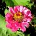 Pčela na cvijetu