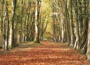 16th Nov 2019 - Dappled woods