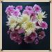 My Birthday Flowers Framed ~