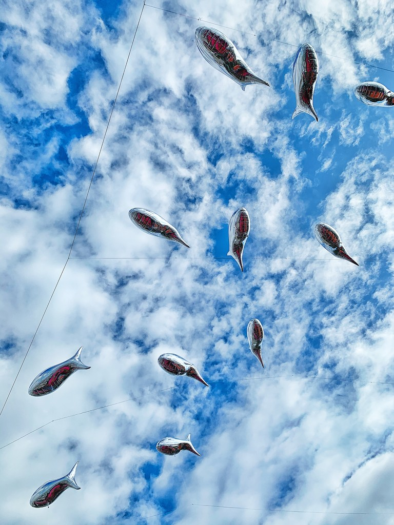 Flying fishes.  by cocobella