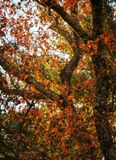 16th Nov 2019 - The Last Leaves