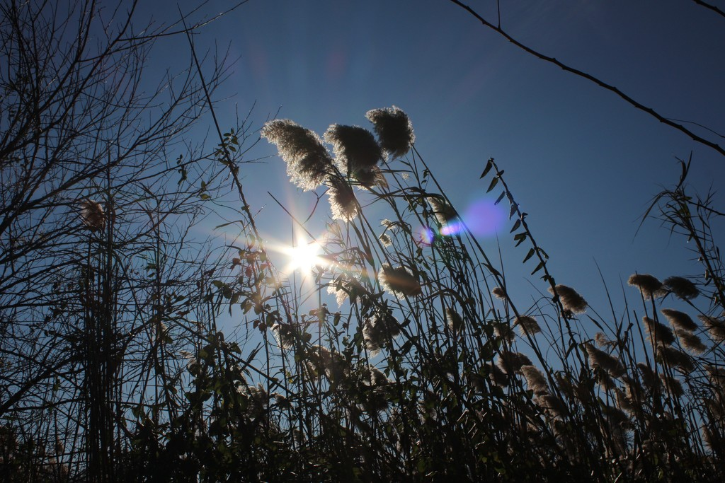 Sunshine by jb030958