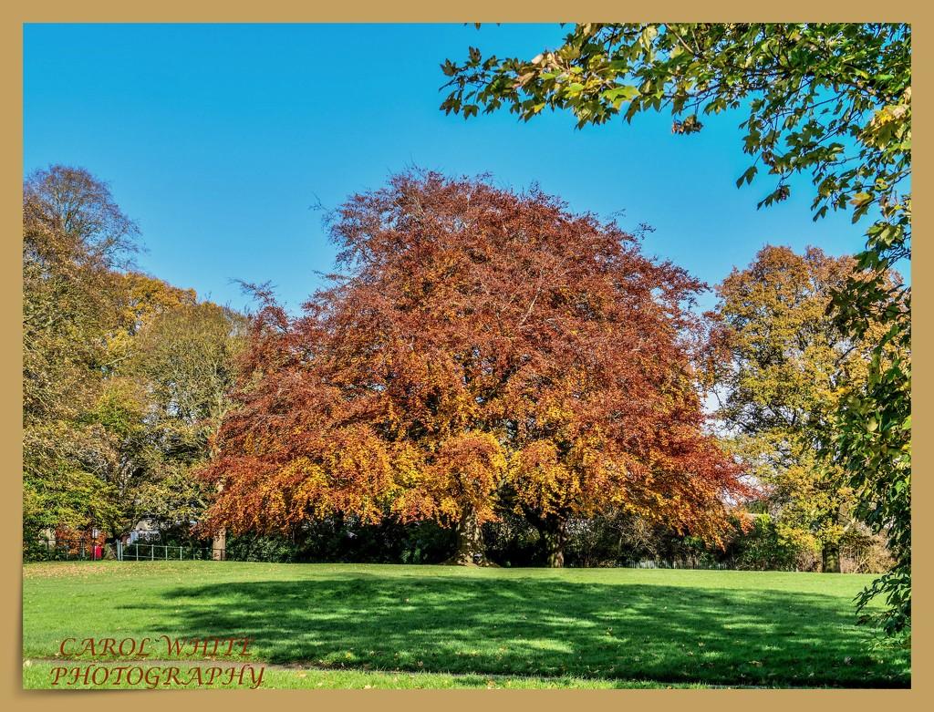 Autumn Colours by carolmw