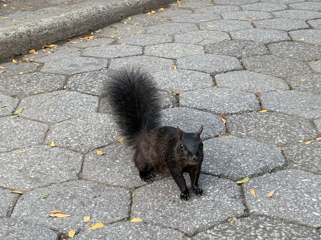 Black squirrel by blackmutts