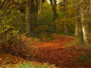 17th Nov 2019 - Walk along a Bridle Way