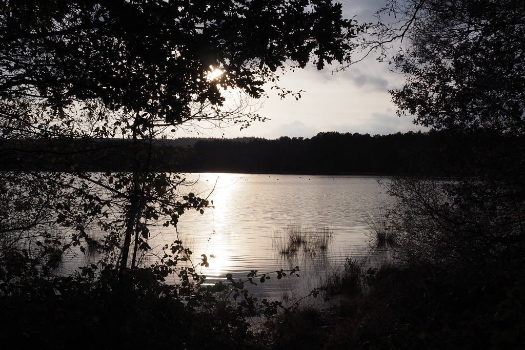 ...the sun has withered from the lake and no bird sings by s4sayer