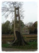 18th Nov 2019 - strange tree