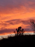 17th Nov 2019 - Evening sky