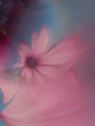 18th Nov 2019 - Single daisy.......