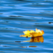 Floating Leaf by seattlite