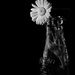 flower bnw