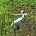 Such An Elegant Water Bird ~