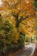 18th Nov 2019 - Autumnal trees