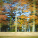 autumn icm