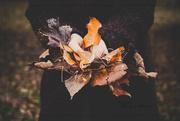 18th Nov 2019 - Leaves of an Unfortunate Fall