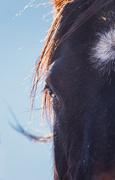 17th Nov 2019 - visiting the horse pen