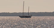 18th Nov 2019 - Sailboat on the Shimmering Waters!