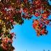 True Autumn Day