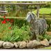 Country Garden...