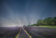 19th Nov 2019 - Mayfields lavender farm
