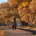 Sharing An Autumn Walk by bigdad