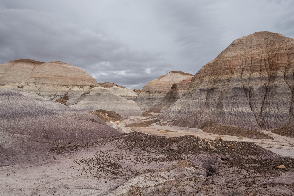 Petrified National Forest by tosee