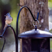 I have a bird feeder!