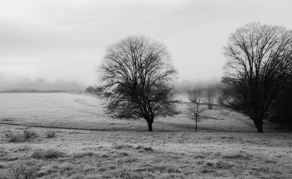 A frosty start by rumpelstiltskin