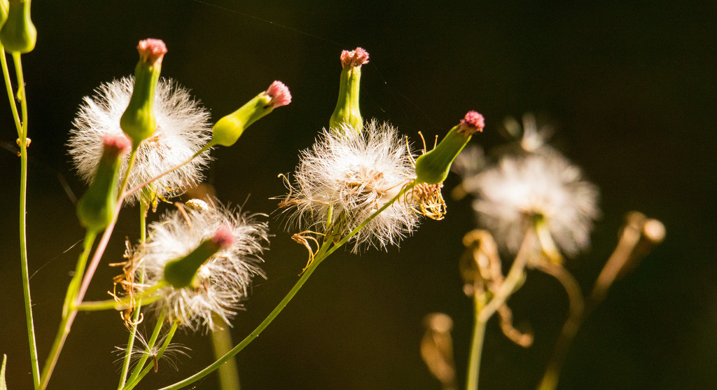 Ground Flowers or Weeds! by rickster549