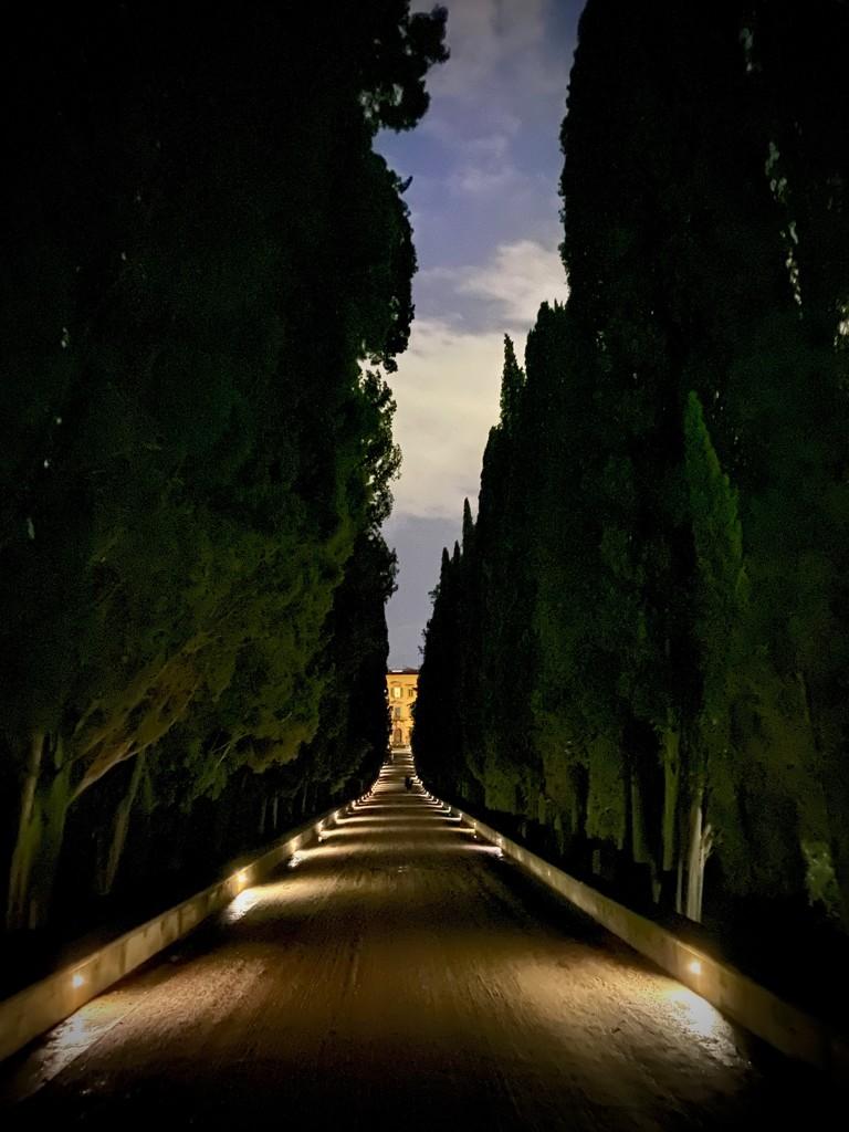 The Approach to La Pietra by jyokota