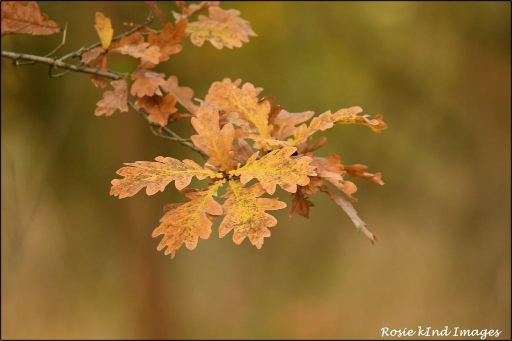 Autumn/fall colours by rosiekind