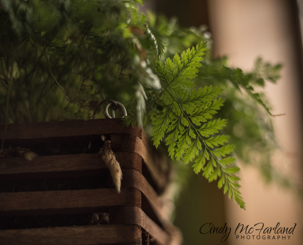 Capturing the Light by cindymc
