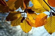 18th Nov 2019 - Last of the Autumn Colours (Pentax M SMC 50mm f1.7)