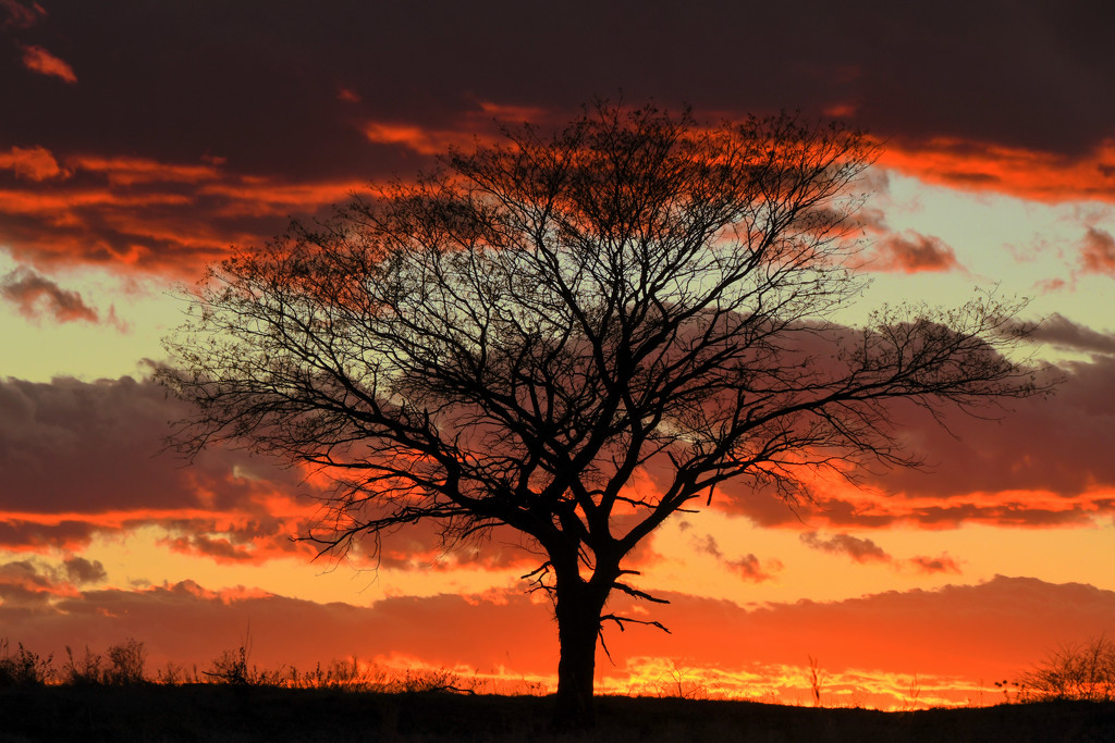 Tree and Layers of Kansas Sky by kareenking
