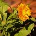 Orangish/Yellowish Flower!