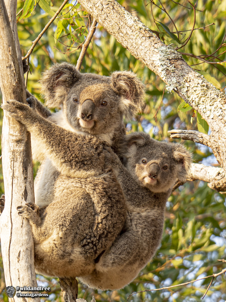 it's all in a mothers nature by koalagardens