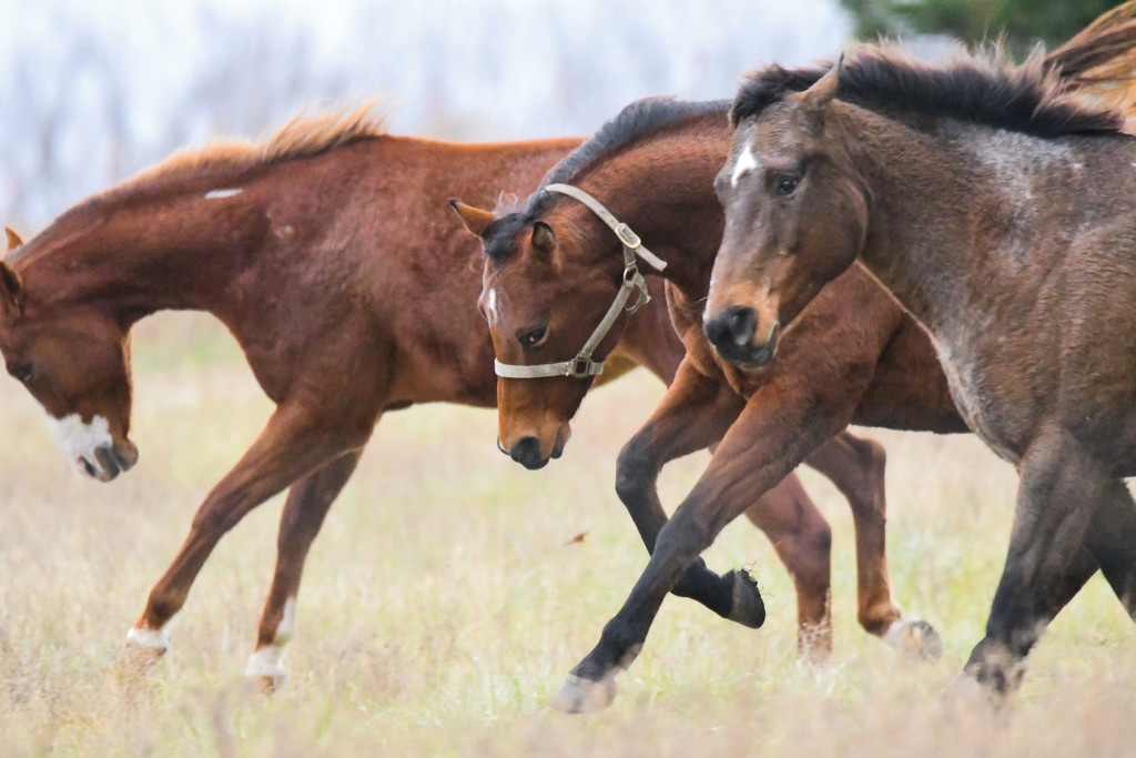 The Race by kareenking