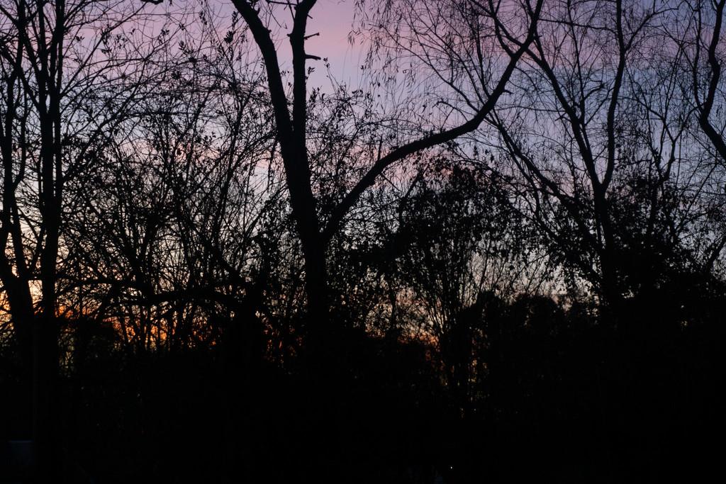 Pink sky  by randystreat