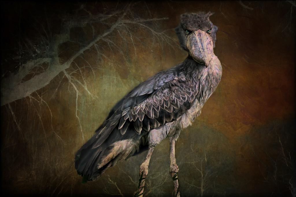 Angry Bird by joysfocus