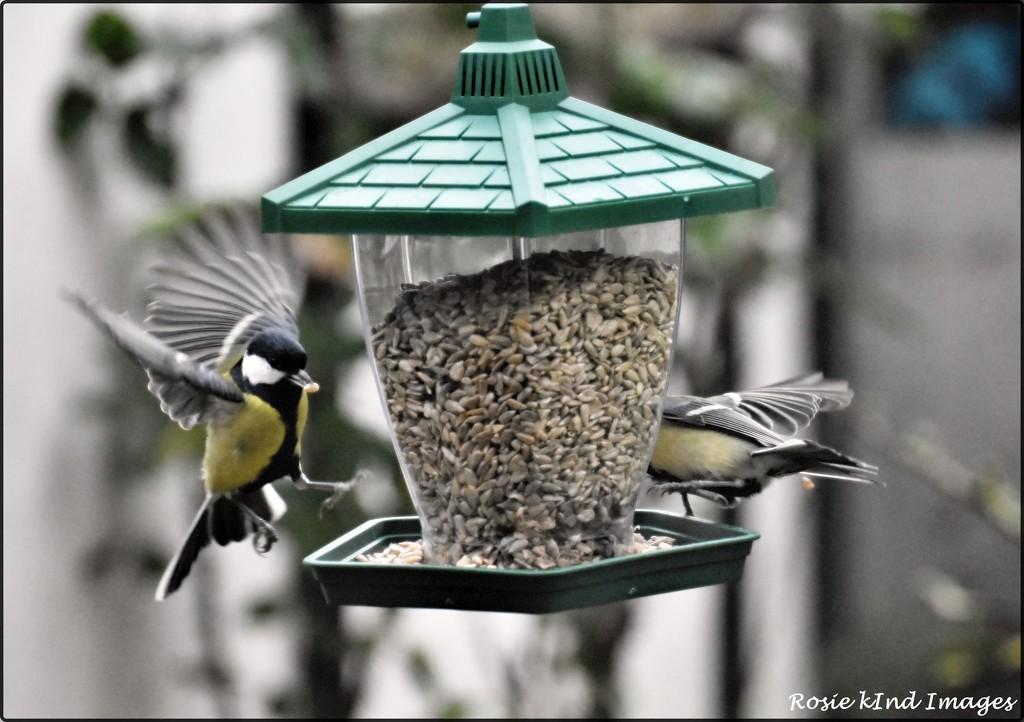 RK2_6565 Frenzy at the feeder by rosiekind