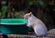22nd Nov 2019 - Bird Bath Turned Squirrel Fountain