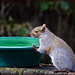 Bird Bath Turned Squirrel Fountain by gardencat