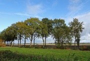 23rd Nov 2019 - landscape with a row of trees