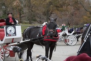 22nd Nov 2019 - Horse & Buggy rides