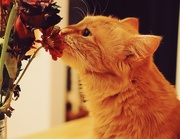 22nd Nov 2019 - Day 326:  Stopping To Smell The (Dead) Flowers