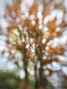 18th Nov 2019 - sol tree