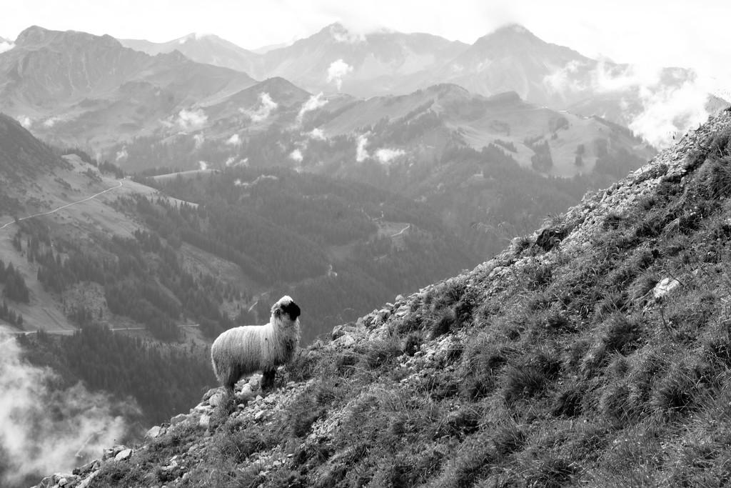 Austria by vincent24