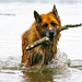 Fetch by stevejacob